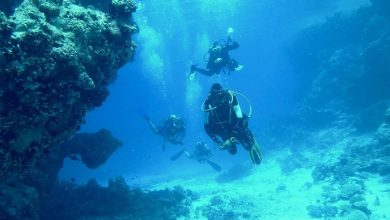 Photo of Bautismo de buceo en Mallorca