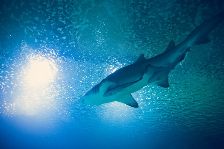 Oceanografic de Valencia. Tiburon Oceanografic