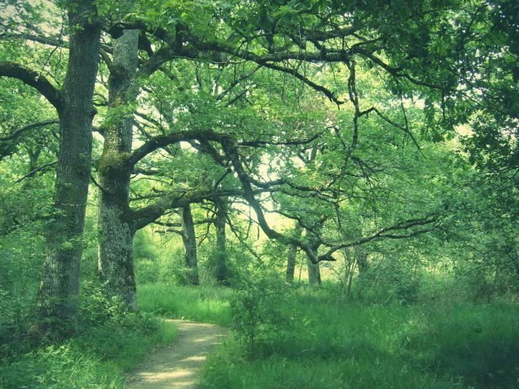 Bosque de Orgi Ultzama Navarra