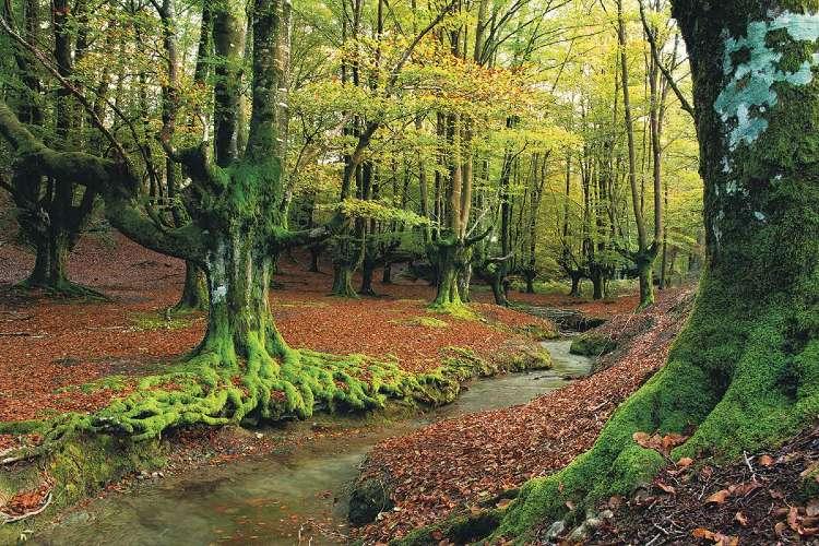 Los bosques más bonitos de España. Hayedo de Otzarreta Vizcaya