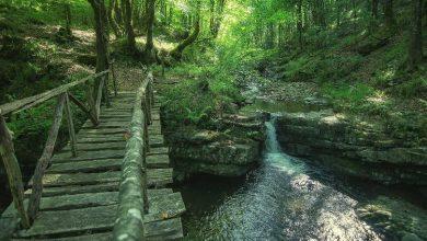 Parque natural Saja-Besaya Cantabria