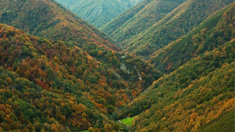 Reserva integral de Muniellos Asturias