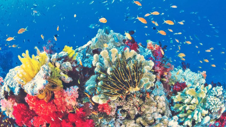 Gran barrera de coral Perth